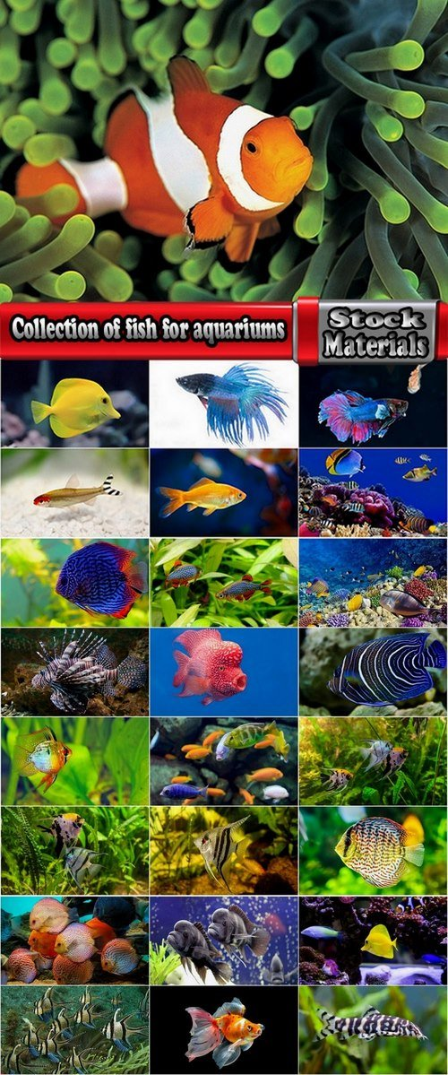 Collection of fish for aquariums 25 UHQ Jpeg