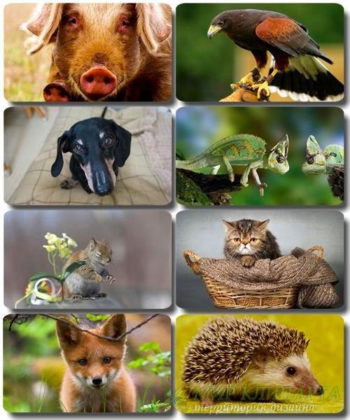 Забавные животные - Коллекция фото обоев (часть 40)