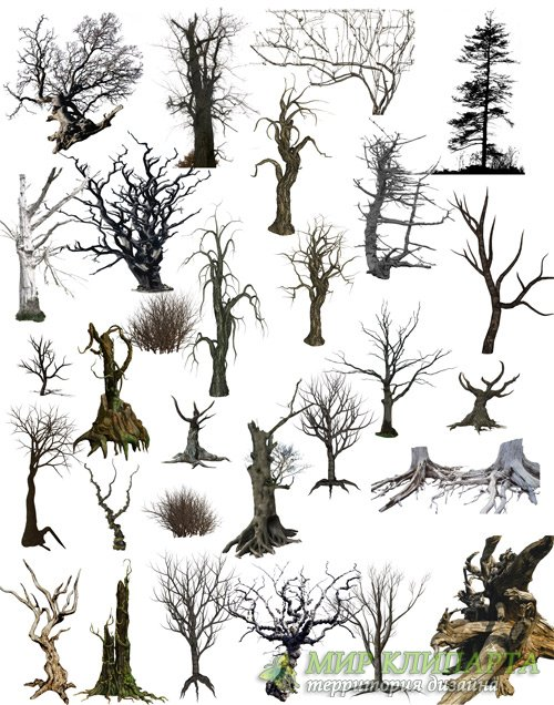 PSD clipart old dead trees