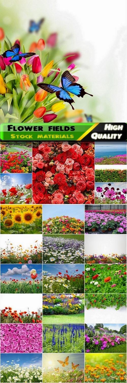 Flower fields Stock images - 25 HQ Jpg