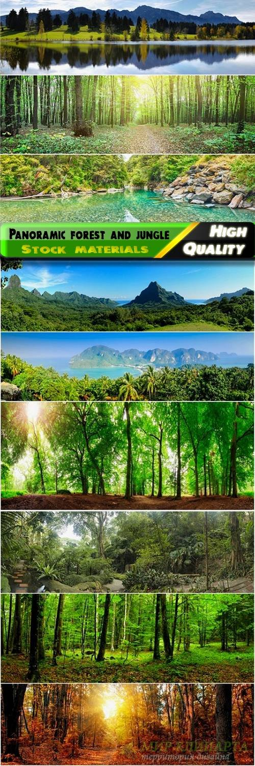 Panoramic forest and jungle Stock images - 25 HQ Jpg