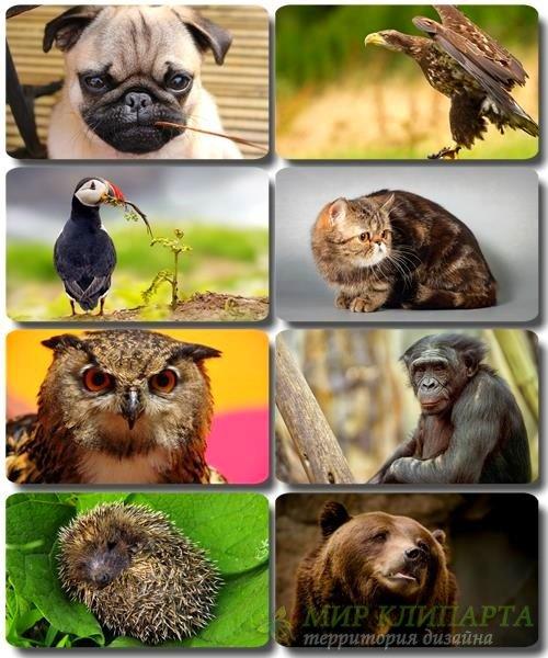 Забавные животные - Коллекция фото обоев (часть 41)