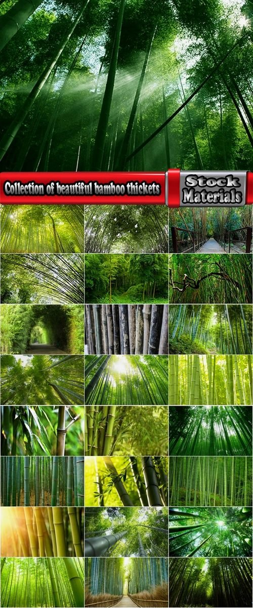 Collection of beautiful bamboo thickets 25 UHQ Jpeg