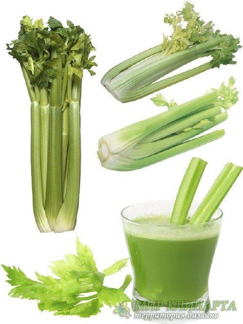 Зелень, приправа: Сельдерей (подборка клипарта)