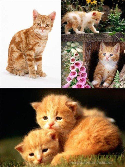 Рыжие коты и котята (подборка фотографий)