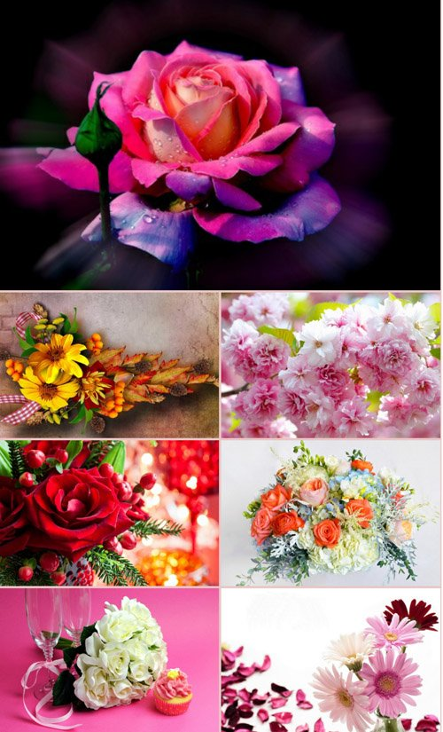 Обои для рабочего стола красивые цветы. Часть 17