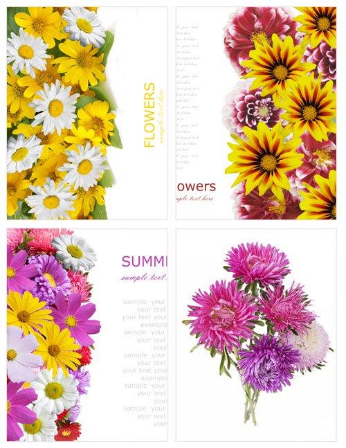 Стоковые фотографии - Красивые цветы. Часть 3