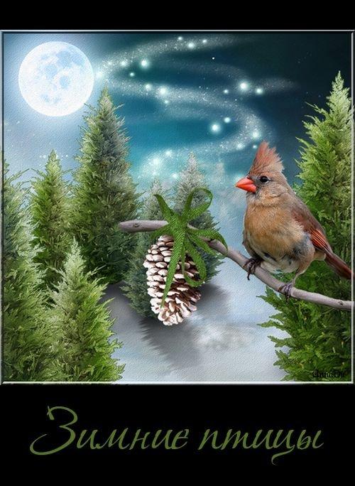 Зимние птицы - клипарт на прозрачном фоне