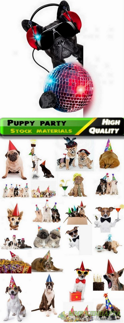 Puppy party and funny dogs Stock images - 25 HQ Jpg