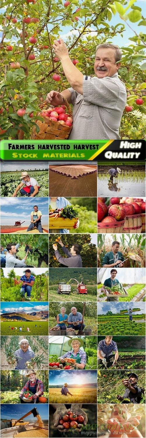Farmers harvested harvest Stock images - 25 HQ Jpg