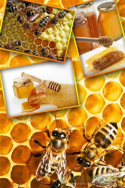 Мед, соты, пчелы (подборка изображений)