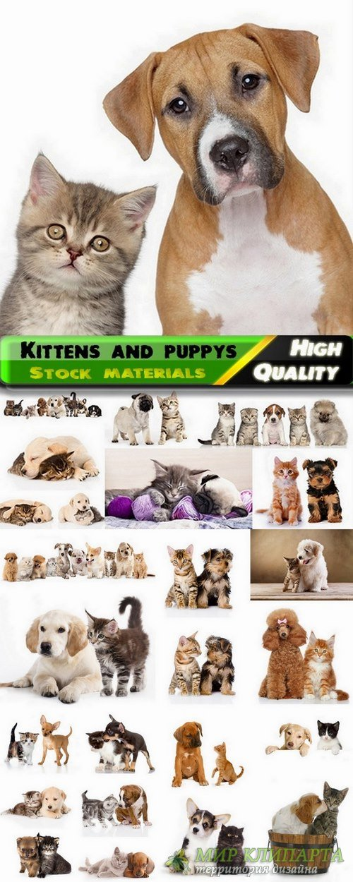 Kittens and puppys Stock images - 25 HQ Jpg