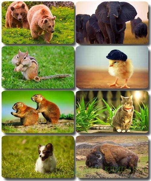 Забавные животные - Коллекция фото обоев (часть 43)