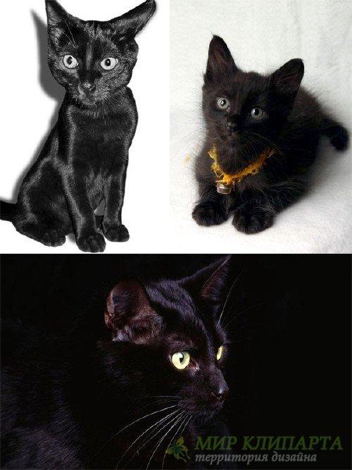 Черные котята (подборка фотографий)