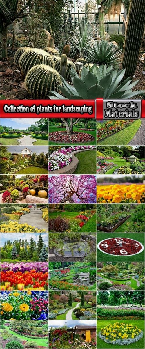 Collection of plants for landscaping 25 UHQ Jpeg