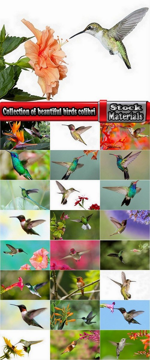 Collection of beautiful birds colibri 25 UHQ Jpeg