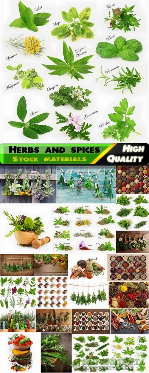 Herbs and spices Stock images - 24 HQ Jpg