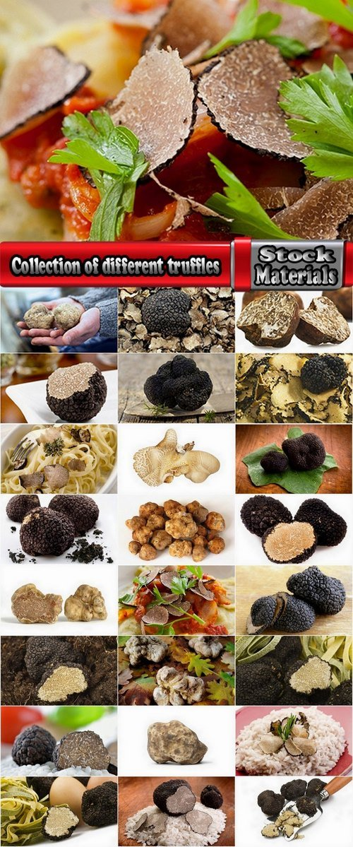 Collection of different truffles 25 UHQ Jpeg