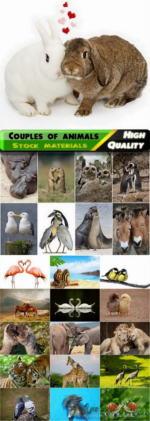 Beautiful couples of animals Stock images - 25 HQ Jpg