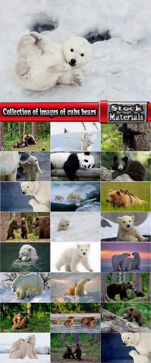 Collection of images of cubs bears 25 HQ Jpeg
