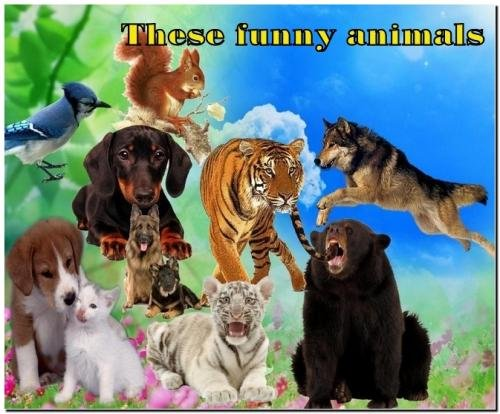 These funny animals (PNG)