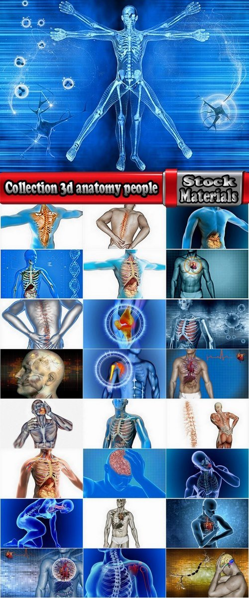 Collection 3d anatomy people 25 HQ Jpeg