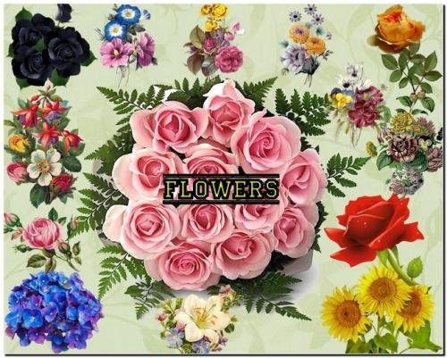 Flowers (PNG)