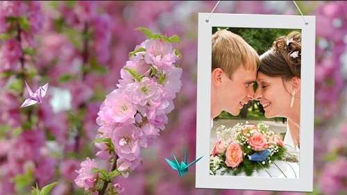 Вишня цветёт - Проект ProShow Producer
