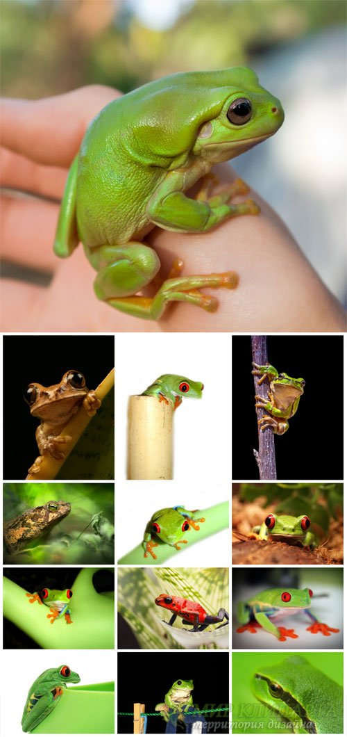 Frogs # 2 - stock photos