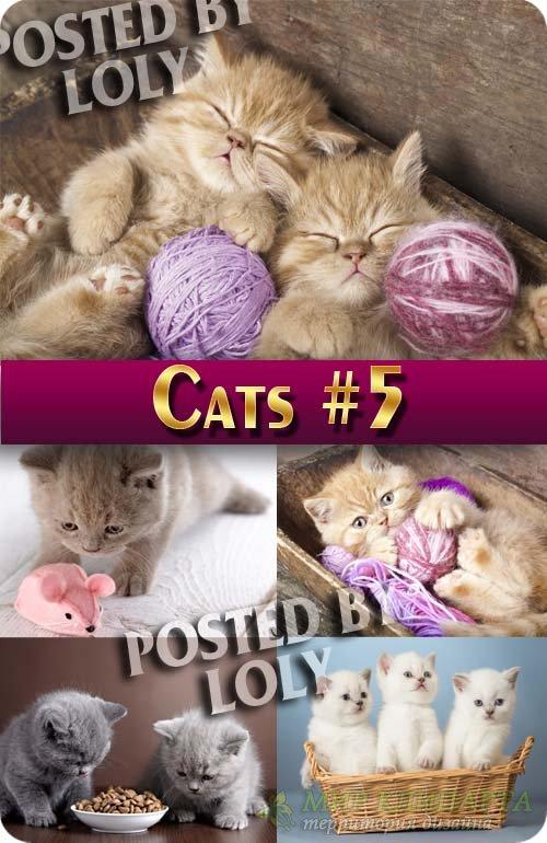 Чудесные котята #5 - Растровый клипарт