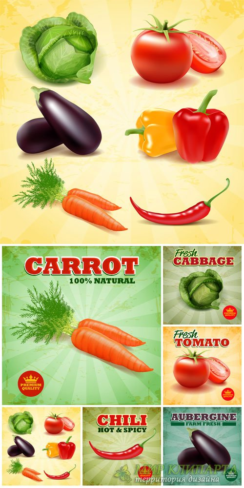 Vegetables, food labels vector