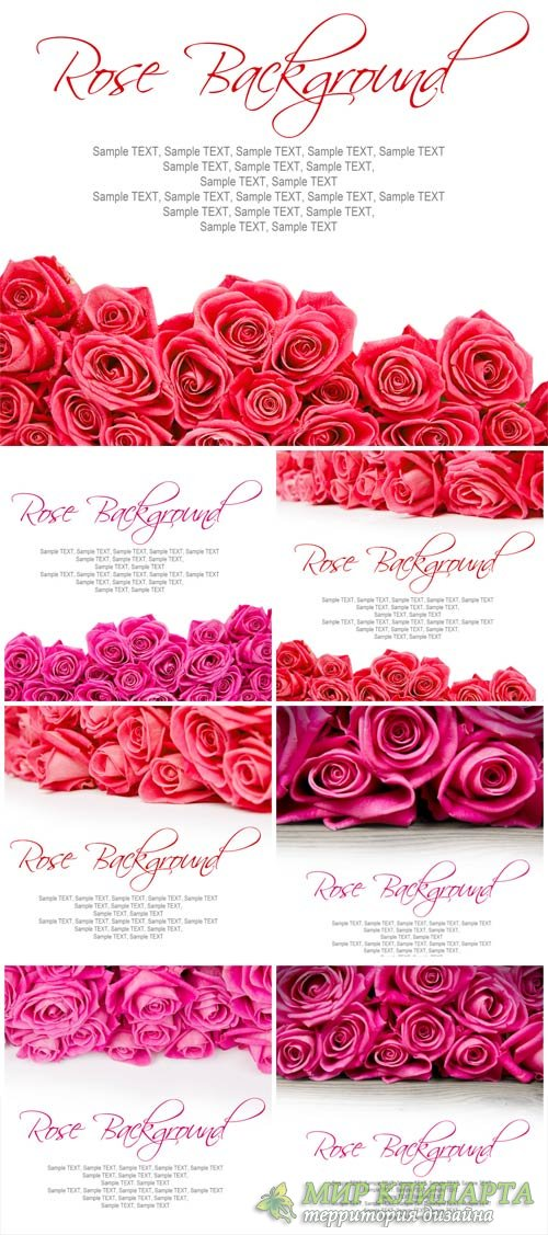 Valentine's Day background with beautiful roses - stock photos
