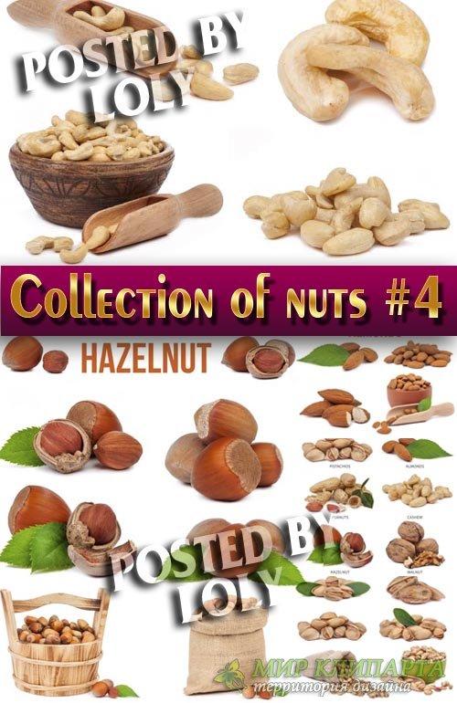 Еда. Мега коллекция. Орешки #4 - Растровый клипарт