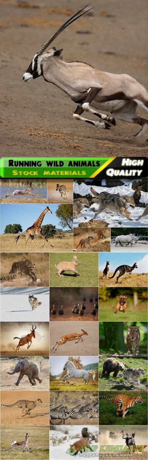 Running wild animals Stock images - 25 HQ Jpg